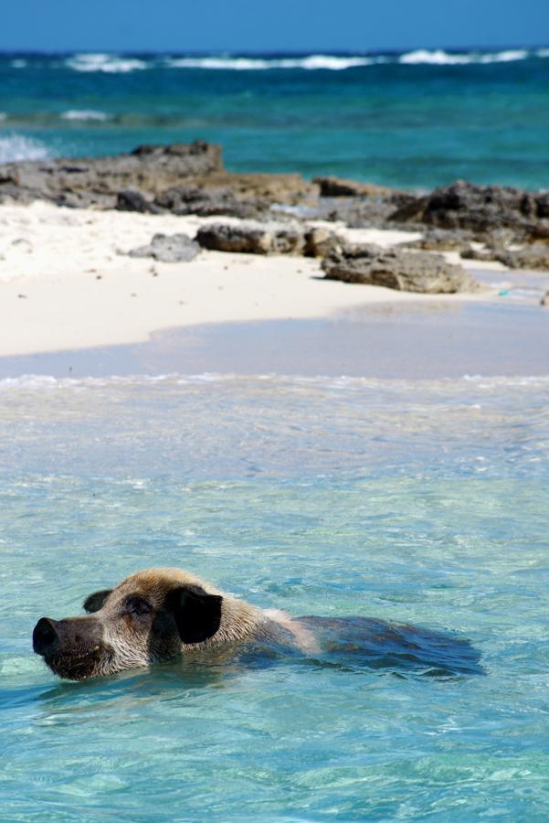blog-bahamas (6)
